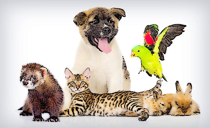 Animales_Domésticos