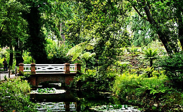 Botánica_de_jardín