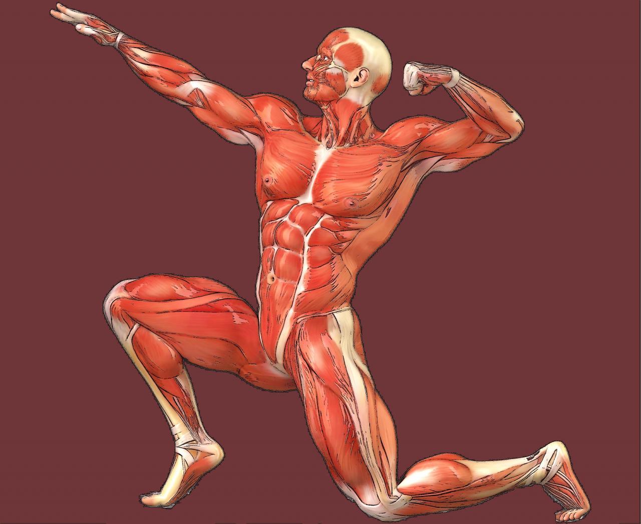 cuerpo_fisico