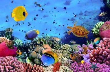 Ecosistema-Acuatico