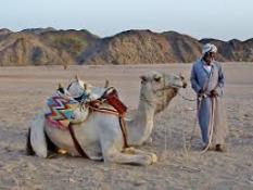 Beduino