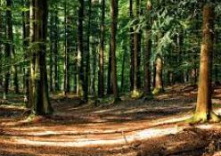 Bosque mixto