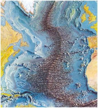 dorsaloceanica