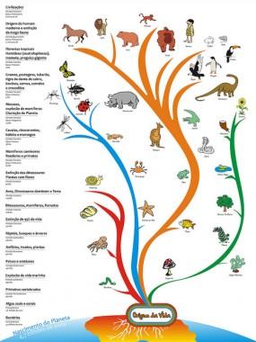 filogenetica